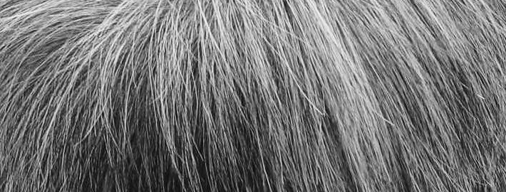 グレーカラー髪型01